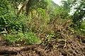 Perspektiven des Parque Nacional do Iguaçu 27 (21927358310).jpg