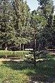 Peterhof (4388359626).jpg