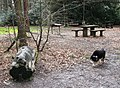 Picnic Area with Dog Sculpture, Wendover Woods. - geograph.org.uk - 1192349.jpg