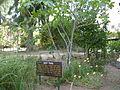 PikiWiki Israel 13842 Rina Smilansky Garden in Rehovot.JPG