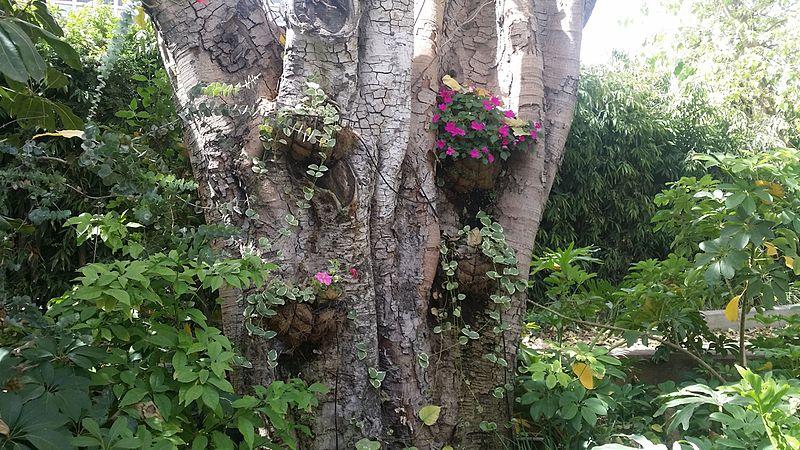 עציצים על עץ