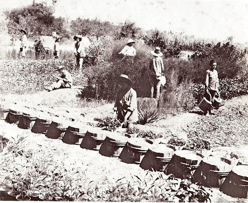 מקוה ישראל 1892