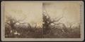Pile of tree debris, by Camp, D. S. (Daniel S.).png