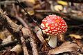Pilze 2010-09-25-4345.jpg