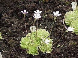 plantes grasses noms et images