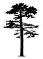 Pinus sylvestris Silhouette (oddsock).png