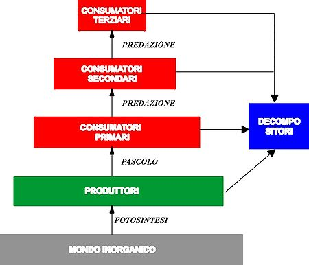 Sinecologia - Wikipedia