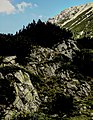 Pirin-2014-Todorka13.jpg