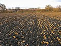 Ploughed Field - geograph.org.uk - 1114721.jpg