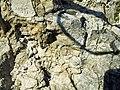 Poluvsie - skalní jehla (10).jpg