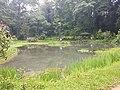 Pond View 20170706 160253.jpg