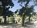 Port-au-Prince, Haiti - panoramio (1).jpg