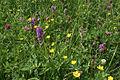 Potwell Dyke Grasslands - geograph.org.uk - 851544.jpg
