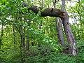 Psilskyi Landscape Reserve (05.05.19) 09.jpg