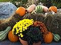 Pumpkins - panoramio (1).jpg