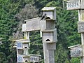 Purple martins (Progne subis) Ford Bay Marina 01.jpg