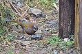Qilan Forest 01.jpg