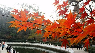 Autumn maple leaves in Qixia Mountain Temple. Qixia Mountain Autumn.jpg