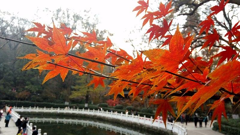 Qixia Mountain Autumn.jpg