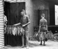 Queensland State Archives 4202 Stringing tobacco leaf c 1938.png