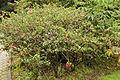 Quitos botaniska trädgård-IMG 9165.JPG