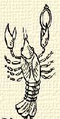 Rák (heraldika).PNG