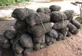 Récoltes d'igname à Savalou au Bénin.png