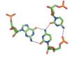 RNA major groove triple.png