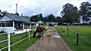 Nuwara Eliya Racecourse - Racecourse, Nuwara Eliya
