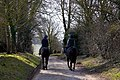 Racehorses exercising on the bridleway - geograph.org.uk - 1761248.jpg