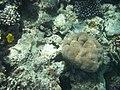 Rafa koralowa Hurgada(9).JPG