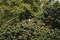 Ranganathittu Bird Sanctuary JEG3970.JPG