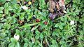Real berries.jpg