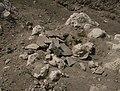 Red rock - bones 2.jpg