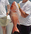 Red snapper catch.jpg