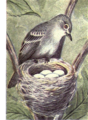 Reed-least-flycatcher.png