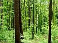 Regenwald - panoramio.jpg