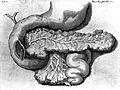 Reiner de Graaf; De Succo Pancreatice... Wellcome L0001553.jpg
