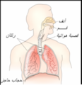 Respiratory system-ar.png