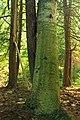 Reynolds Spring Natural Area (4) (29374827952).jpg