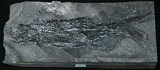 <i>Rhabdolepis</i> Extinct genus of fishes