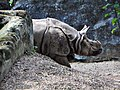 Rhinosaur (58482182).jpeg