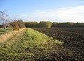 Rice Wood, Helpston, Peterborough - geograph.org.uk - 87484.jpg