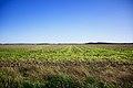 Ridgway-fields-il.jpg