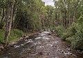 Roaring Fork River in Aspen (91197)a.jpg