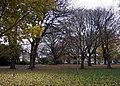 Roath Mill Gardens - geograph.org.uk - 626097.jpg