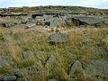 Rocks - geograph.org.uk - 48487.jpg