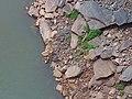 Rocky river bank.jpg