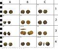 Roman coin hoard (FindID 607141-473987).jpg
