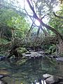 Root bridge (Shillong).jpg